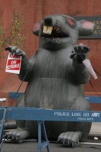 Union Rat