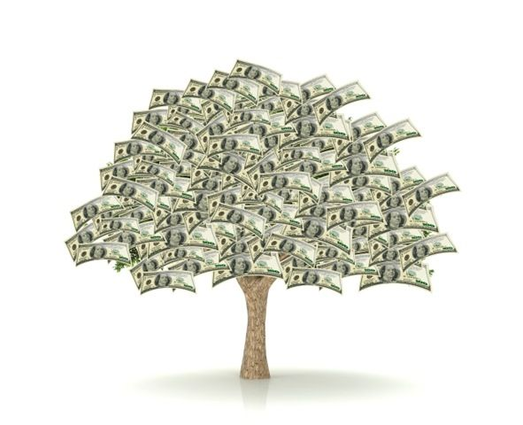 Money Tree Growing